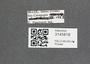 3145818 Macrelmis striata, label