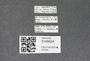 3145824 Macrelmis striata, label