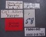 Tachys dimediatus alexandrinus PT labels