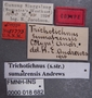 Trichotichnus sumatrensis PT labels