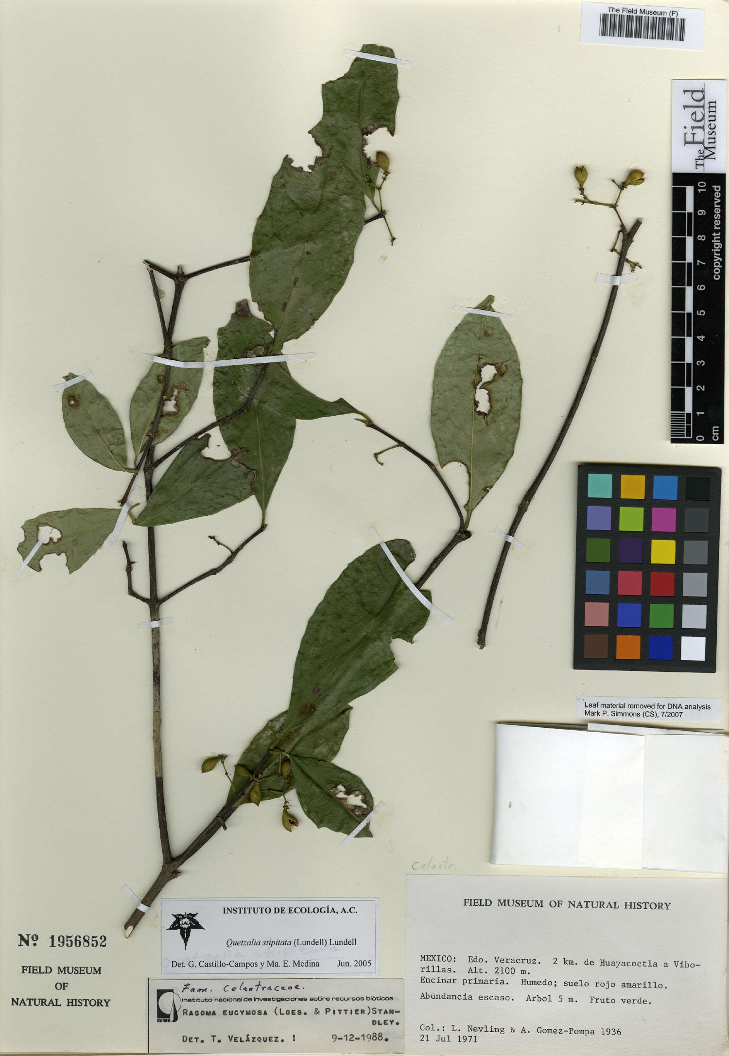 Quetzalia image