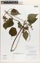 Salvia coriana Quedensley & Véliz, Guatemala, T. S. Quedensley 10187, Isotype, F