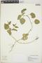 Croton hirtus L'Hér., El Salvador, J. C. González 176, F
