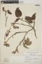 Croton niveus Jacq., Mexico, M. C. Carlson 2215, F