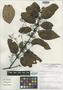 Caryodaphnopsis bilocellata van der Werff & Dao, VIETNAM, H. H. van der Werff 14250, Isotype, F