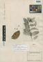Psammisia guianensis Klotzsch, BRITISH GUIANA [Guyana], M. R.  Schomburgk 974, Isolectotype, F
