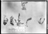 Astragalus pusillus image