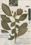 Alloplectus savannarum C. V. Morton, BRITISH GUIANA [Guyana], B. Maguire 23127, Isotype, F