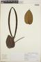 Peltastes peltatus (Vell.) Woodson, Brazil, W. Hoehne, F