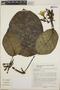 Peltastes peltatus (Vell.) Woodson, Brazil, R. Marquete 3443, F