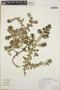 Euphorbia anthonyi image