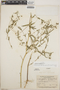 Euphorbia apatzingana image
