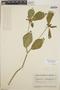 Euphorbia heterophylla image