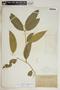 Rauvolfia nitida Jacq., Dominican Republic, N. Taylor 449, F