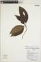 Palicourea cf. subfusca (Müll. Arg.) C. M. Taylor, Peru, I. Huamantupa 15227, F