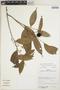 Duguetia quitarensis Benth., Bolivia, N. Paniagua Z. 2214, F