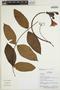 Mandevilla symphytocarpa (G. Mey.) Woodson, Ecuador, R. Aguinda 398, F