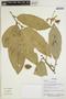 Quararibea guianensis Aubl., Ecuador, R. Aguinda 331, F