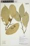 Quararibea guianensis Aubl., Ecuador, R. Aguinda 366, F
