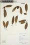Naucleopsis oblongifolia (Kuhlm.) Carauta, Ecuador, R. Aguinda 566, F