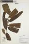 Virola surinamensis (Rol. ex Rottb.) Warb., Bolivia, J. Urrelo et al. 578, F