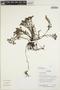 Triolena pileoides (Triana) Wurdack, Ecuador, R. Aguinda 1583, F