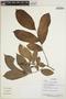 Trichilia inaequilatera T. D. Penn., Ecuador, R. Aguinda 451, F