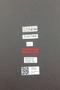 3976423 Metopiasoides decoratus HT M labels