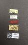 3976444 Hametus inquilinus HT labels