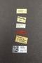 3976448 Hamotus socius PT M labels