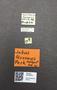 3976531 Jubus terranus HT M labels