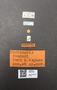 4087725 Abdiunguis fenderi PT M labels
