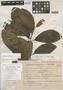 Lucuma austin-smithii Standl., Costa Rica, Austin Smith H1280, Holotype, F