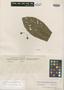 Lucuma laeteviridis Pittier, Guatemala, H. F. Pittier 8534, Isotype, F