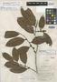 Discocarpus mazarunensis Croizat, BRITISH GUIANA [Guyana], D. B. Fanshawe 4860, Isotype, F