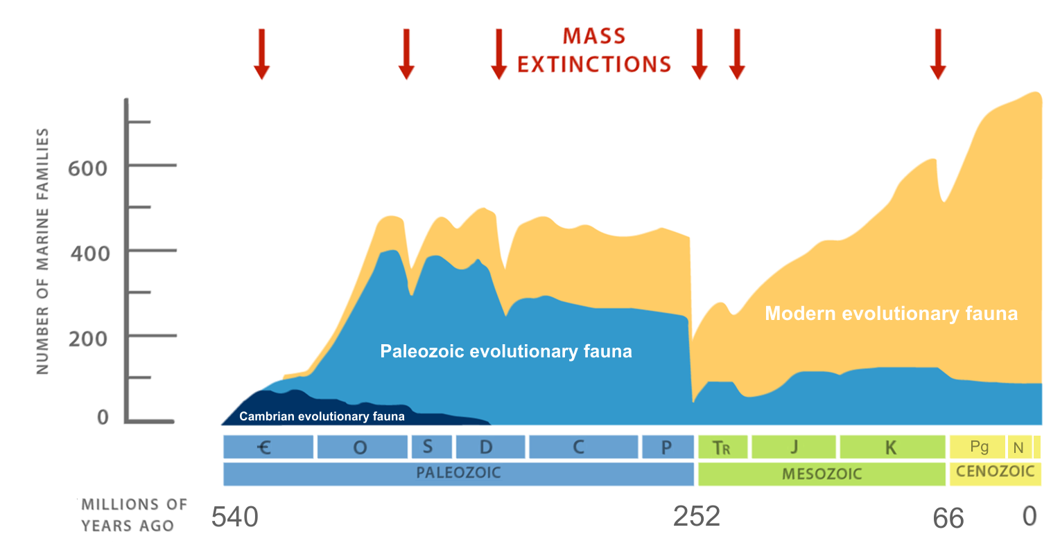 Sepkoski curve showing diversity of marine animal familes through time and 5 major mass exticntion events.