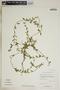 Metastelma inaguense Vail, Bahamas, D. S. Correll 46030, F