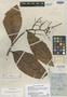 Ardisia copeyana Standl., COSTA RICA, H. E. Stork 1592, Holotype, F