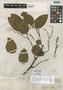 Securidaca latifolia Benth., British Guiana [Guyana], R. H. Schomburgk 714+, Isotype, F
