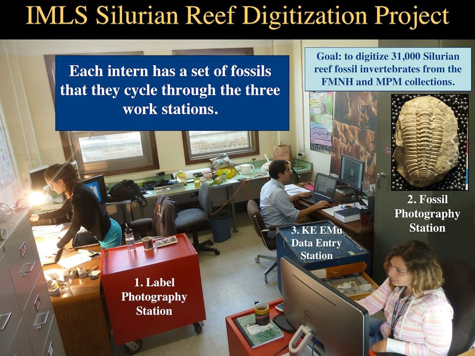 Interns digitizing Silurian reef fossils at three workstations for the IMLS Silurian reef digitization project.