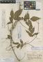 Paullinia tenuifolia Standl. ex J. F. Macbr., PERU, Y. Mexia 6394, Holotype, F