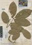 Paullinia mariae J. F. Macbr., PERU, G. Klug 3912, Holotype, F