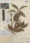 Paullinia williamsi J. F. Macbr., PERU, Ll. Williams 1196, Holotype, F
