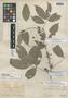Paullinia itayensis J. F. Macbr., PERU, Ll. Williams 75, Holotype, F