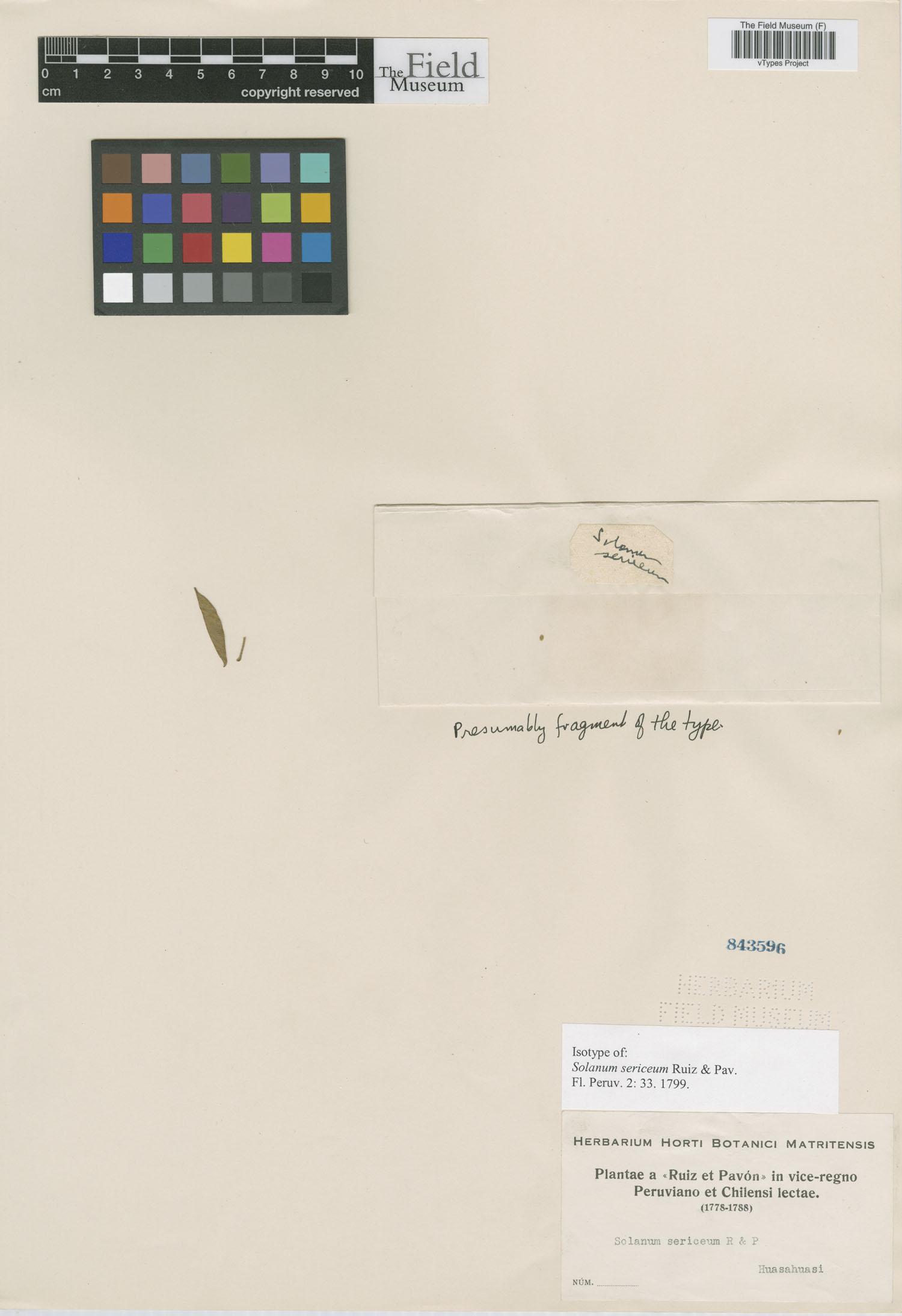 Solanum sericeum image
