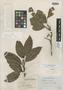 Roupala nitida Rudge, FRENCH GUIANA, H. O. Sleumer 51, Isotype, F