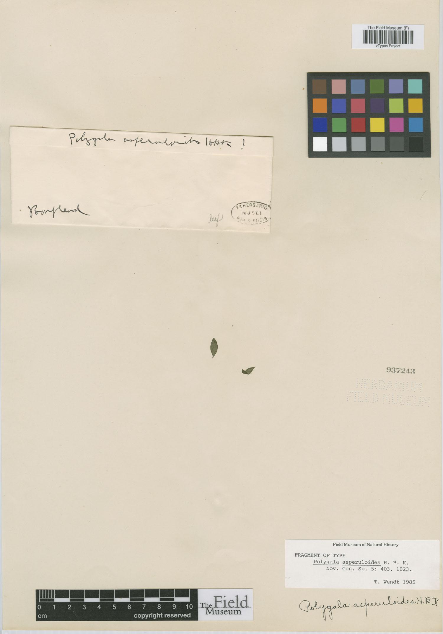 Polygala asperuloides image