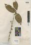 Polygala scleroxylon Ducke, BRAZIL, A. Ducke 315, Isotype, F