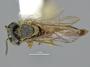 3188813 Melipona, habitus, dorsal view