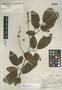 Prunus novoleontis image